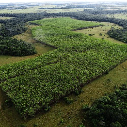 Management de Proyectos Forestales